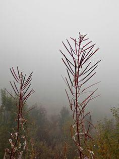 High Tatras, foggy wetter. Fog. Beautiful Slovakia nature ♥