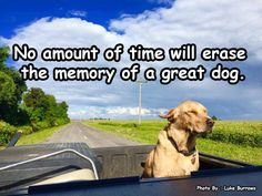 All those with some mileage on us who've had at least one good fur buddy or fur kid are living proof. Just ask, most of us will be glad to tell you all about them! All Dogs, I Love Dogs, Puppy Love, Dogs And Puppies, Doggies, Animal Quotes, Dog Quotes, Care Quotes, Animal Pics