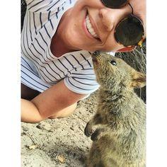 Who needs a quokka selfie when you can get a quokka kiss instead.  #quokkakiss #quokkaselfie #rottnestisland by jaimeerussell http://ift.tt/1L5GqLp