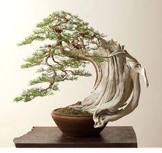 Bonsai Art, Bonsai Plants, Bonsai Garden, Garden Plants, Bonsai Trees, Ikebana, Garden Art, Garden Design, Bonsai Tree Types