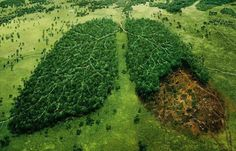 This pin is for the WWF and it subtly shows deforestation in the form of a forest in a lung shape. This highlights the destructive nature which deforestation has on the environment by comparing it to a possibly fatal human injury. Creative Advertising, Advertising Agency, Advertising Ideas, Print Advertising, Advertisement Examples, Advertising Techniques, Advertising Photographer, Funny Commercials, Funny Ads