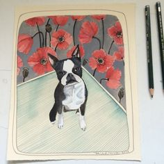 Boston Terrier Illustration