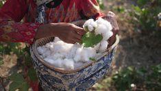 Cotton farmer in Gaji Village, East Java. Challenge The Status Quo, Leaf Drawing, Local Women, We Wear, Slow Fashion, Sustainable Fashion, Artisan, Java, Farmer
