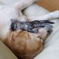 #dog kitten love#Ponzu Tsuyu