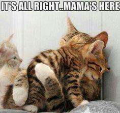 Mamma Love