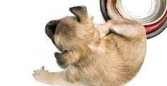 I 10 migliori rimedi naturali per proteggere il cane dalle pulci