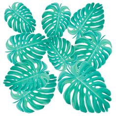 Philodendron Leaves for tropical decor #greenleaves