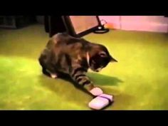 Funny Flying Playing Cats and Dogs 2015