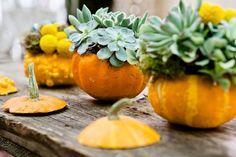 succulents in pumpkins