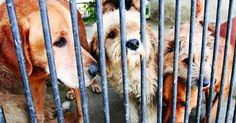 An Advisory Board in Mexico to generate animal protection policies Getting A Puppy, Animal Protection, Puppy Mills, Old Dogs, Corgi, Mexico, Puppies, Board, Animales