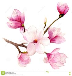 Spring Background With Watercolor Magnolia Flower Stock Illustration - Image: 71466612
