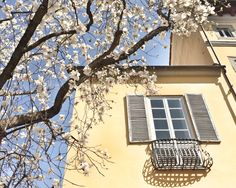 Flowers tree. Spring time. Toscana