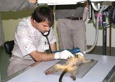 Resultado de imagen para temaiken animales en peligro de extincion