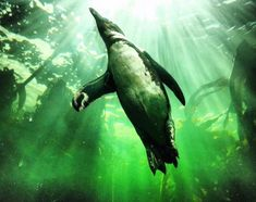 Experience the incredible diversity of the Indian and Atlantic Oceans at one of Cape Town's top tourist attractions, the Two Oceans Aquarium. Penguin Life, Ocean Aquarium, African Penguin, Happy 7th Birthday, Cape Town South Africa, Penguins, Appreciation, Dancing, The Incredibles