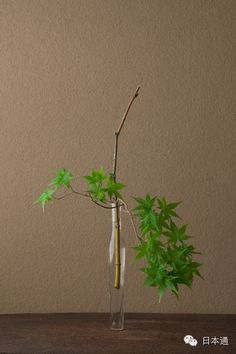 Green maple with slim glass bottle