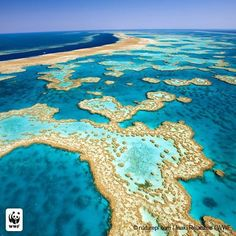 It really happened! The Australian government has banned dredge dumping in the Great Barrier Reef. That's a safer home for more than 1,500 species of fish, 411 types of hard coral, one-third of the world's soft coral, 134 species of sharks, and six of the world's seven species of threatened marine turtles! Wins like this are fueled by your support: THANK YOU to the 500,000 supporters who took action on this issue! Follow the link in our bio to learn more.