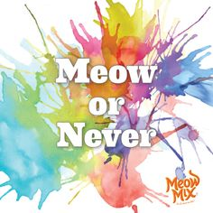 Meow or never!