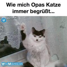 Opas Adolf Hitler Katze - Lustige Katzenbilder