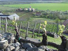 Spring in Somló. #kreinbacher #somló #juhfark #landscape #nature #vineyard #hungary #wine #winelover pic.twitter.com/TvFLsxHGTL Wine Quotes, Wineries, Land Scape, Hungary, Vineyard, Horses, Twitter, Spring, Outdoor Decor