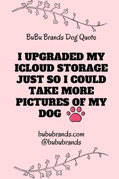 Bubu Brands dog quote: I upgraded my icloud storage so I could take more pictures of my dog. The best dog treat company in the world! Best Treats For Dogs, Best Dogs, More Pictures, Taking Pictures, Treat Quotes, Dog Nutrition, Natural Dog Treats, Dog Signs, Dog Boarding