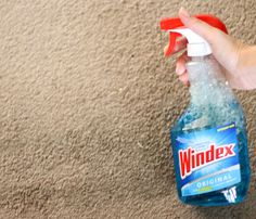 6 Simple and Impressive Tips and Tricks: Carpet Cleaning Van dry carpet cleaning stains.Carpet Cleaning Ideas Essential Oils carpet cleaning pet stains tips.Carpet Cleaning Pet Stains Tips. Deep Cleaning Tips, House Cleaning Tips, Cleaning Solutions, Spring Cleaning, Cleaning Hacks, Cleaning Products, Cleaning Services, Lava, Removing Carpet