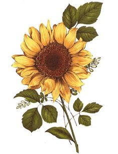 Details about Yellow Sunflower Brown Center Flower Select-A-Size Waterslide Ceramic Decals Bx Easy to use.soak in warm water for 30 seconds or so until decal slides easily off the paper backing. Sunflower Drawing, Sunflower Art, Sunflower Tattoos, Yellow Sunflower, Sunflower Paintings, Sunflower Tattoo Design, Art Floral, Watercolor Flowers, Watercolor Art