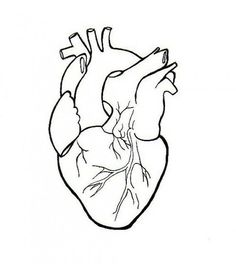 Human Heart Embroidery Anatomical Line Art Simple Embroidery Pattern PDF