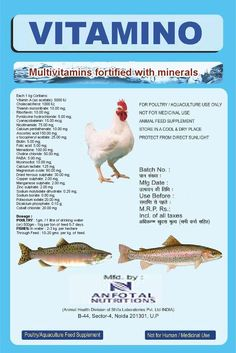 13 Best Anfomed India images in 2015 | Poultry, Livestock