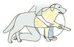 The Magical Effects of Dog Massage and Stretching