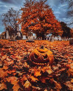 Halloween Ii, Halloween Quotes, Halloween Pictures, Halloween Pumpkins, Halloween Treats, Autumn Scenery, Autumn Nature, Autumn Cozy, Autumn Fall