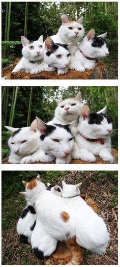 Shiro and his Bros
