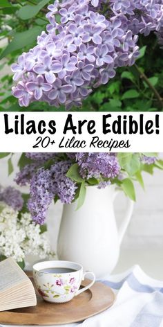 How to Eat Lilacs (and Other Ways to Use Them) Ways to use lilacs ~ Did you know lilacs are edible flowers? Here's recipes using lilacs for your spring kitchen. (Plus historical medicinal ways to use lilacs) Lilac Flowers, Edible Flowers, Purple Roses, Diy Flowers, Spring Flowers, Making Homemade Ice Cream, Edible Wild Plants, Baking With Honey, Flower Food