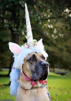 Unicorndog.