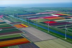 aerial view of tulip fields in the netherlands