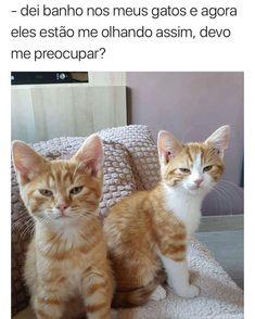 Eu amo o humor dos gatos depois q eles tomam banho