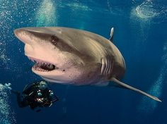 Beneath the Waves Photo by Jan Morton -- National Geographic Your Shot