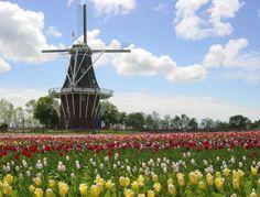 2016 Tulip Time May 7th-14th             Holland MI                 www jbandme.com #downtownholland