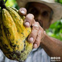 Actualidad/ CACAOTEROS VENEZOLANOS FORTALECIDOS EN EL EXTERIOR    Venezuela ahora tiene presencia en la Organización Internacional de Agricultores del Cacao (ICCFO)    Desde este 15 de marzo Venezuela tendrá participación activa ante la Organización Internacional de Agricultores del Cacao (ICCFO), mediante el Comité Venezuela.   La presentación de dicho Comité se realizó en el Hotel Meliá Caracas y contó con la presencia del Vicepresidente de la ICCFO Jorge Sarmiento y productores de…