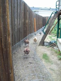 Suburban Homesteading: Introducing our Chunnel:  the chicken tunnel This.