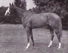 Aureole(1950)Hyperion- Angelola By Donatello II. 4x5 To St Simon, 5x5 To Galopin & Cyllene. 14 Starts 7 Wins 3 Seconds 2 Thirds. $119,458. Wong Coronation Cup(Eng), Harwicke S(Eng), Cumberland Lodge S(Eng), King George VI & Queen Elizabeth S(Eng), 2nd KG VI & QE S(Eng), Epsom Derby(Eng), Coronation S, 3rd St Leger S(Eng), Eclipse S(Eng). Champion England 's Sire In 1960. Die In 1974.