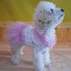 Vestidos para Cães Amarelo / Púrpura Verão XS / S / M / L / XL Algodão de 2016 por $15.49