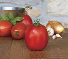 Tomato 'SuperSauce'