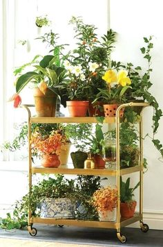 Beautiful indoor plant stand trolley look