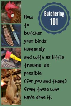 It may not be the BEST farm task, but when it needs to be done, these tips will come in handy when you decide to delve into butchering chickens. :