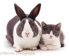 Cat & Bunny Brothers From Another Mother