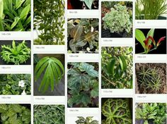 Plants for Crested Gecko Habitats - At the moment they have 128 selections! / Black Jungle