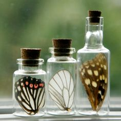 Butterfly wings in little bottles. Now I know what to do the next time I find a dead butterfly. Stumpwork wings?