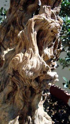 Weird Trees, Self Thought, Architectural Sculpture, Bonsai Garden, Nature Tree, Olive Tree, Ikebana, Tree Art, Science Nature