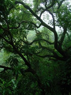 2009 jungle by 808 view, via Flickr