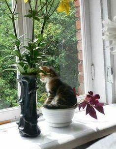 ❤️ =^.^= CÅt§ in The Window ♥️